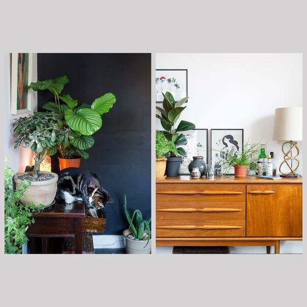 urban-jungle-bloggers-book-living-and-styling-with-plants-the-future-kept-3_grande