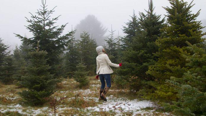 https---19mvmv3yn2qc2bdb912o1t2n-wpengine.netdna-ssl.com-science-files-2017-12-Choosing-Christmas-Trees-Credit-Lori-Belloir-1260x708.jpg