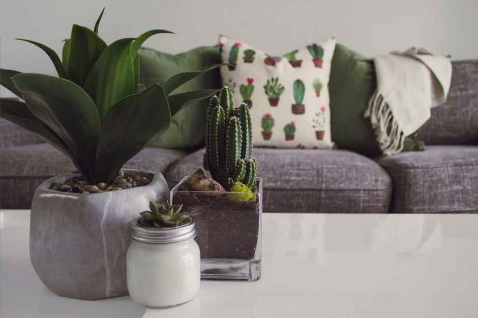Grey sofa with green accents and house plants