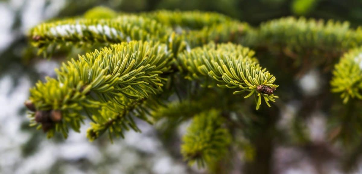 tree-3010103_1280.jpg