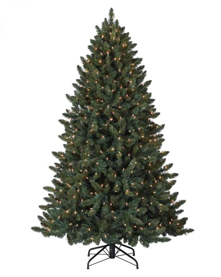 Balsam-Spruce-Tree-2