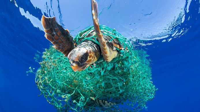 https---www.theoceancleanup.com-fileadmin-media-archive-img-Pages-GPGP-4_Effects-TOC_Entangled_Turtle_by_Francis_Perez