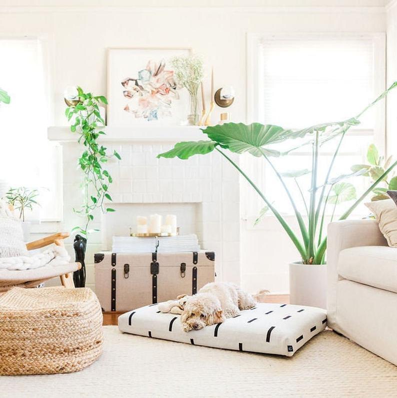 modern dog beds